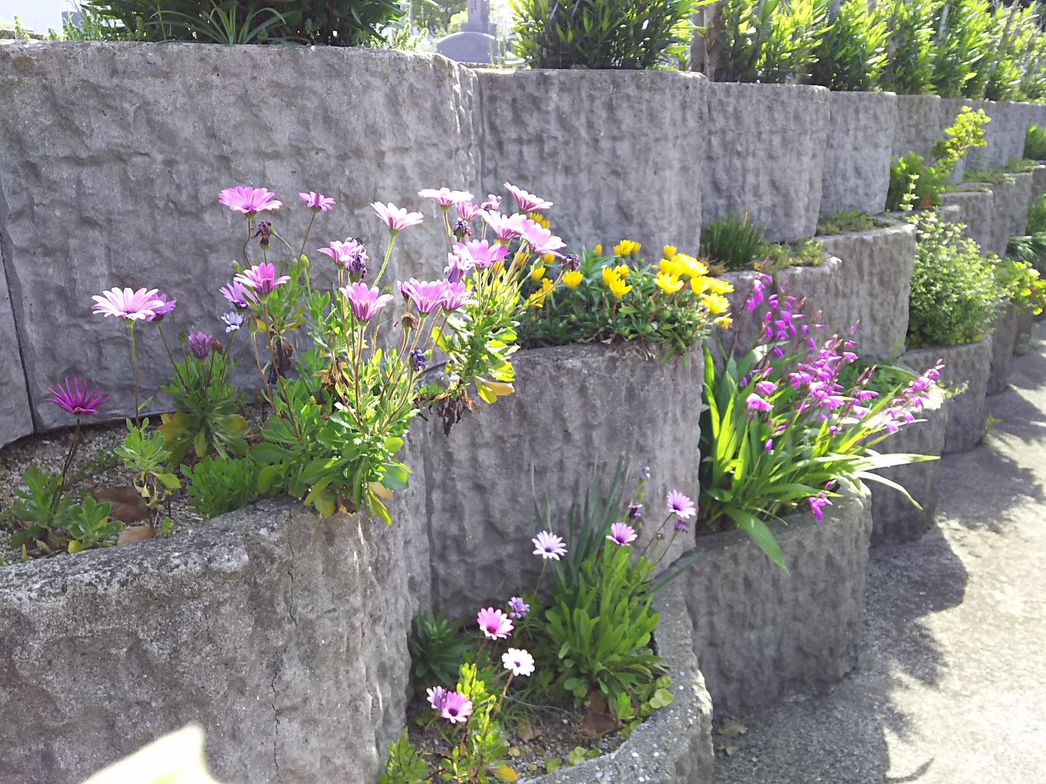 季節を彩る花壇に囲まれてお墓参りを