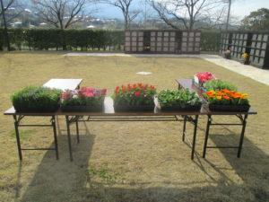 3月22日(日) お花ポット プレゼントイベント開催いたします。